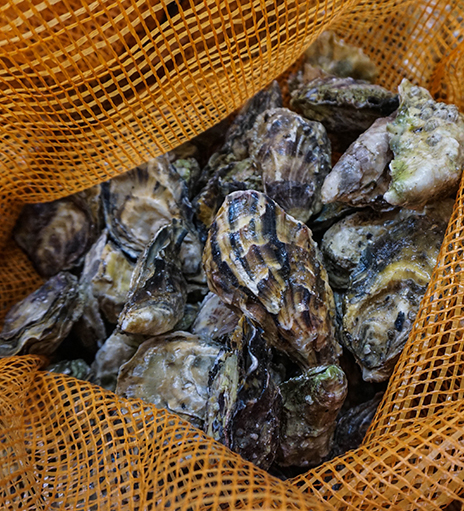 Wholesale Shellfish