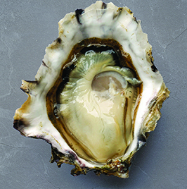 Golden Mantle Oysters