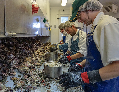 Taylor Shellfish careers