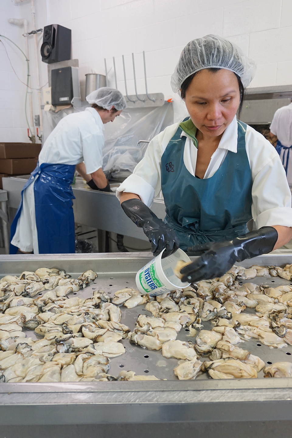 Fanny Bay Oysters employee putting shucked oyster meat into tub
